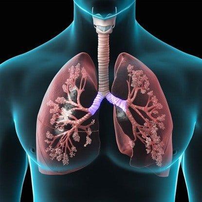 أين يدخل الدم الغني بالأكسجين أولا